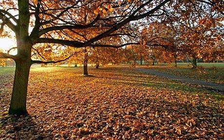 autumn_1490388c